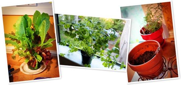 View herbs in window