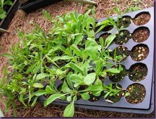 plantsforfront