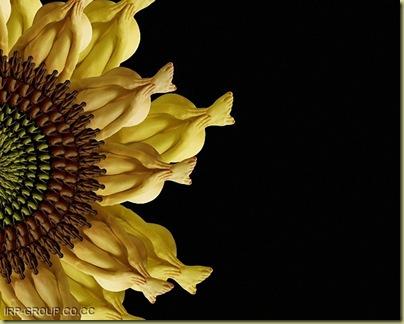 flores humanas 9
