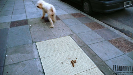 Poodle Dog Just Finished Pooping on a Sidewalk in Buenos Aires, Argentina