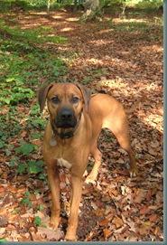 2008-10-18 Autumn Dog Walk 031
