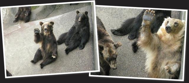 View bears