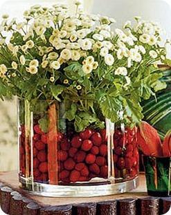 cranberry-daisies-de