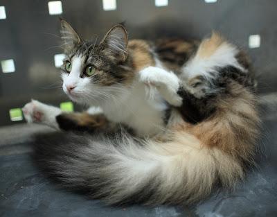 Yoga for katter