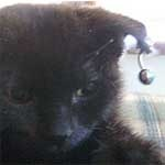 Pierced black kitten