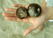 Strange Fruit-Sheva Apelbaum