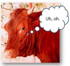 red-cow