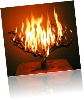 burning-bush-web