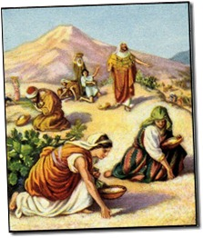 gathering manna