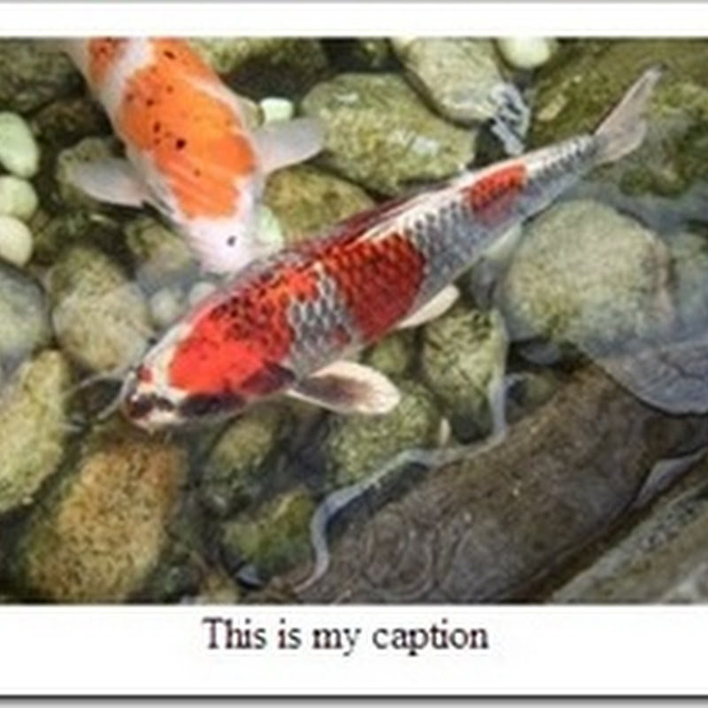 How to add captions to photos