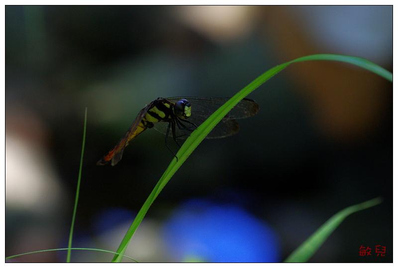 第一次的生態作業 (20090712富陽生態團)... ^^