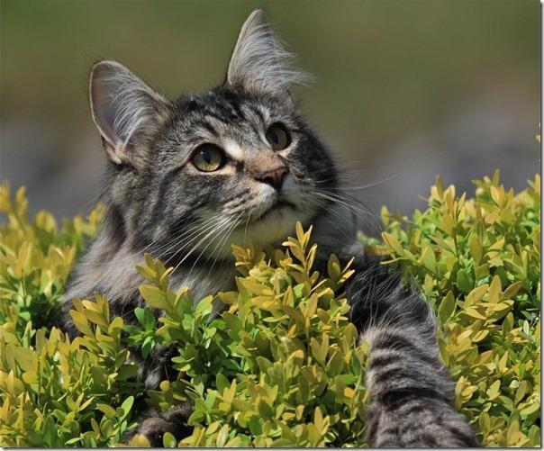 animales blogdeimagenes (2)