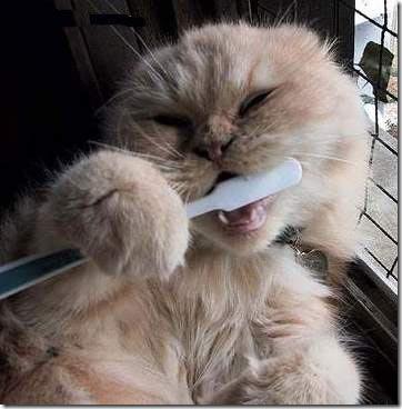 gatos divertidos patatitasylimones (7)
