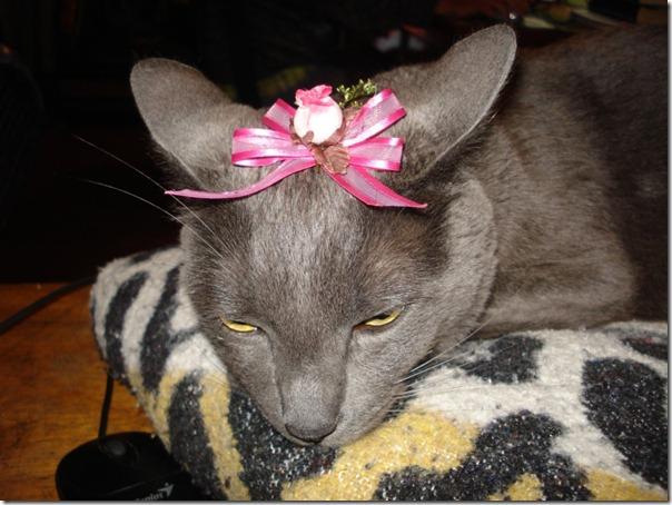 gatos divertidos patatitasylimones (11)