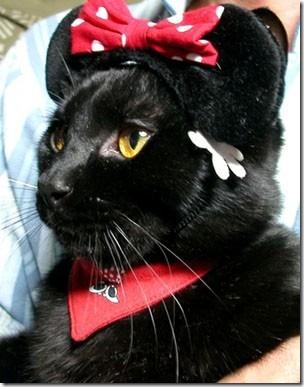 gatos divertidos patatitasylimones (13)