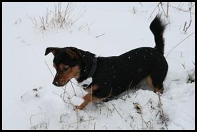 Sneeuw dec. 2009 082