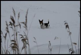 Sneeuw dec. 2009 085
