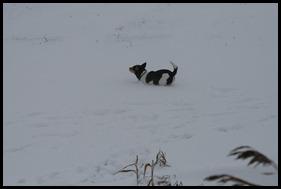 Sneeuw dec. 2009 086