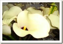 bloemen 007
