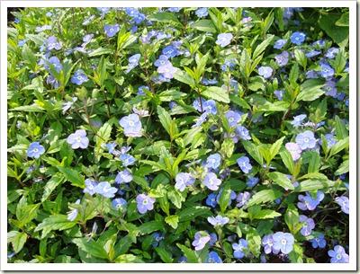 tuin april 2011 002
