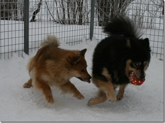 Cita og Indy med ballen