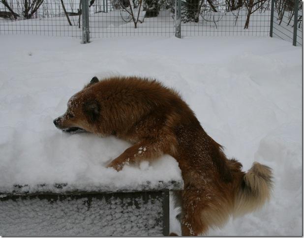 Cita i snøen2
