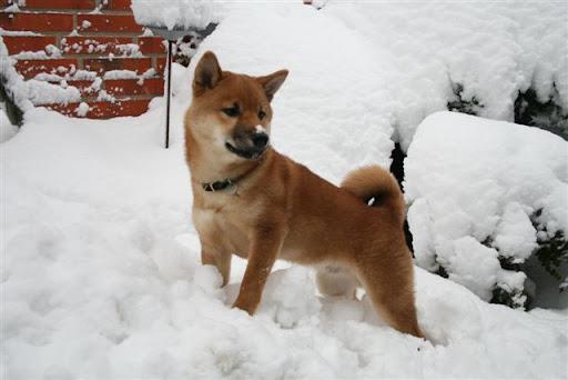 SÃ¥ skal der leges i sneen.