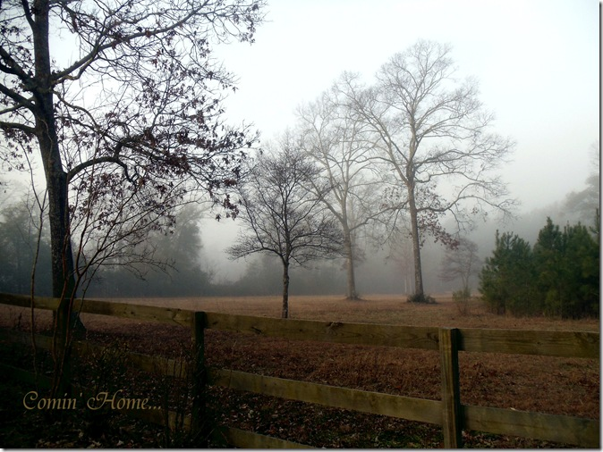 Front pasture in the fog