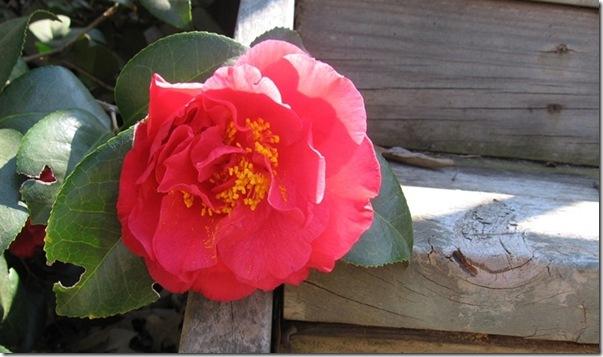 narrow rose