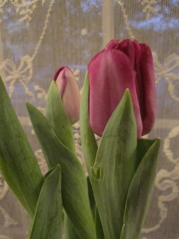 Valentine 062