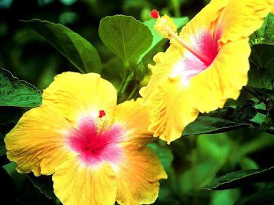 http://lh4.ggpht.com/_nflKduinmyo/SrTi6hZ11OI/AAAAAAAABRE/YLqivXIeP9k/s400/flower-wallpapers-0106.jpg