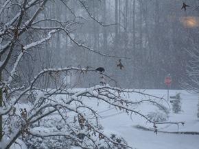 Snow 2009 029