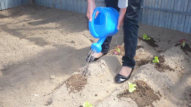 Plantacións