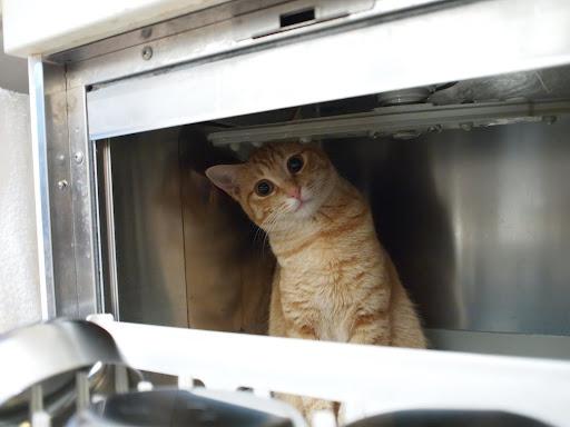 [写真]食器洗い機の中からこんにちは