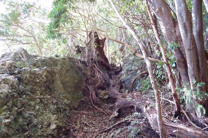 三ツ瀬明神山2合目出て最初のロープの写真