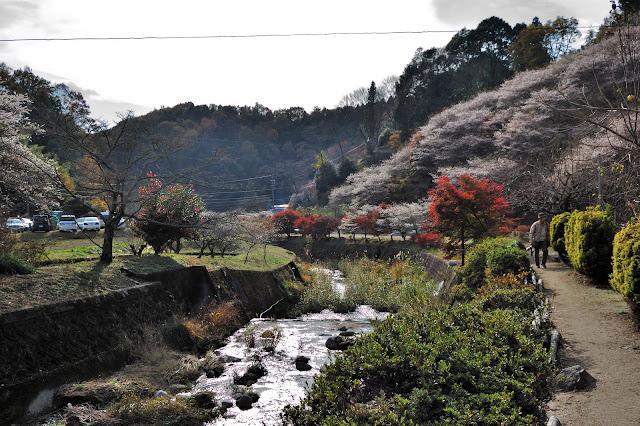 川見四季桜公園の川原の写真