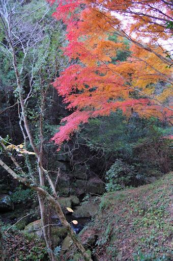 王滝渓谷登山道の紅葉の写真