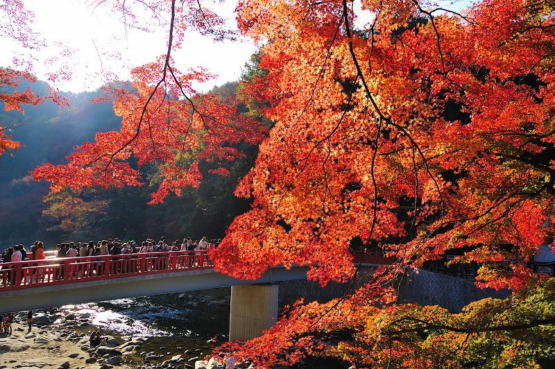 足助・香嵐渓の紅葉の写真
