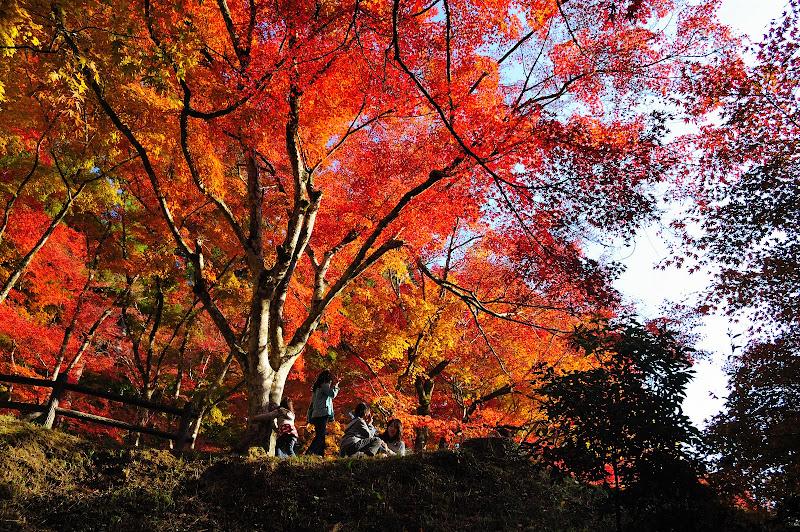 待月橋のそばの紅葉の写真