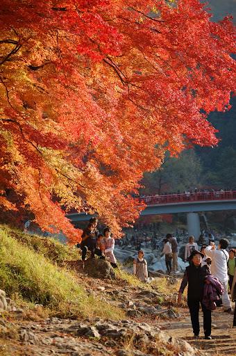 香嵐渓の待月橋手前の紅葉と記念写真の観光客の写真