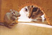 Задачка с подвохом - Кошки-мышки