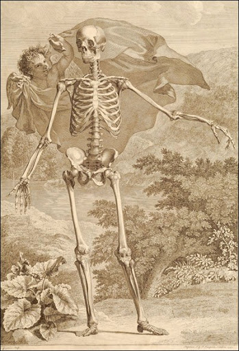 Bernhard Siegfried Albinus (1697-1770) (anatomist), Jan Wandelaar (1690-1759) (artist), London, 1749