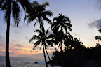 Hawaii Sunset, Palm Silhouette