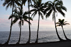 Hawaiian Pacific Horizon framed Palms