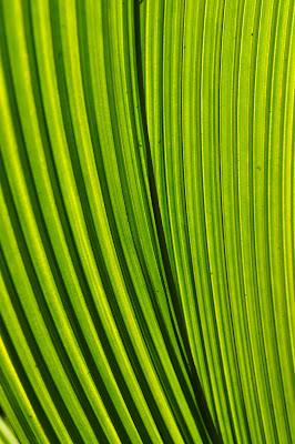 Sunlit ribbed leaf macro.