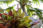 Palm and friend. (Hawaii Tropical Botanical Garden near Hilo - htbg.com) Photo by Lisa Callagher Onizuka