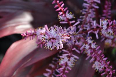 Purple flowers and leaves.