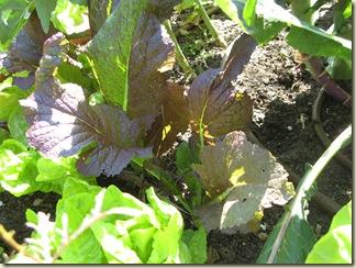Garden Purple 008