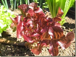 Garden Purple 015