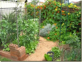 Garden & Dandelion 011